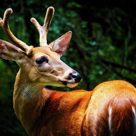 New Antlers by Laura Vilandre