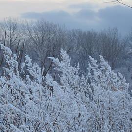 New Fallen Snow by Barbara Ebeling