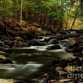 New Hampshire Brook by Steve Brown