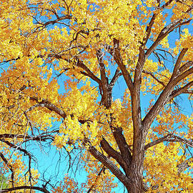 New Mexico October by Roselynne Broussard