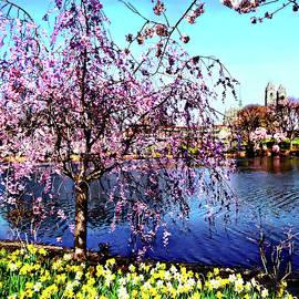 Newark NJ - Branch Brook Park in Spring by Susan Savad