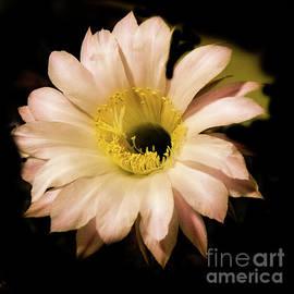 Night Blooming Cactus by Robert Bales