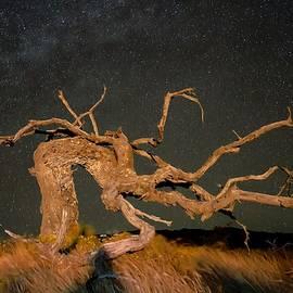 Night Guardian by Heidi Fickinger