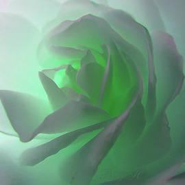 Nile Mist Green Glow White Rose - Floral Photographic Art - Rose Macro by Brooks Garten Hauschild