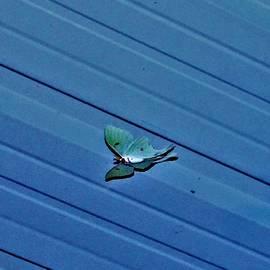 Luna Moth Hover, Diagonal Blue Industrial by Adrienne Hantz Kelley