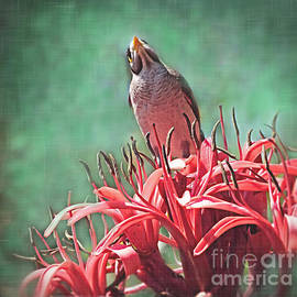 Noisy Miner Bird by Trudee Hunter