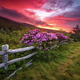North Carolina Blue Ridge Mountains Appalachian Trail Spring Flowers Sunset by Dave Allen
