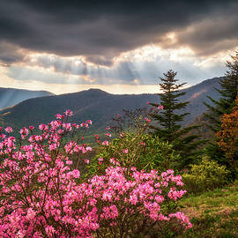 North Carolina Blue Ridge Parkway Spring Flowers Scenic Landscape Asheville NC by Dave Allen