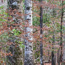 North Carolina Winter Scene Along the Trail by Bob Decker