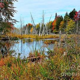North Country Beaver Pond by Steve Brown