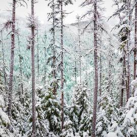 North Hills in Winter by Matt Hammerstein