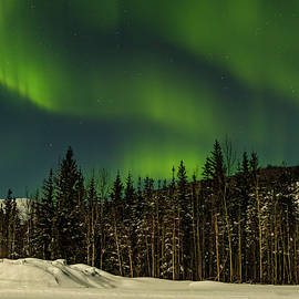 Northern Lights Fill the Sky by Lois Lake