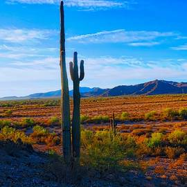 Northwest Hidden Valley by Judy Kennedy