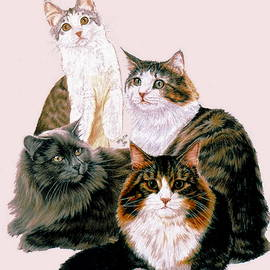 Norwegian Forest Cat Collage by Barbara Keith