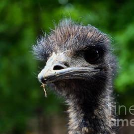 Nosey Emu by Broken Soldier
