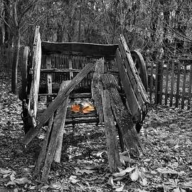 Not the Cart it Once Was by Yolanda Caporn