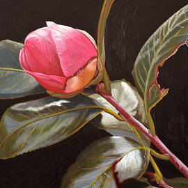 November Rose by Thu Nguyen