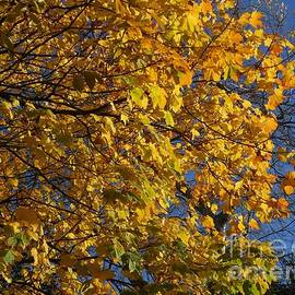 November Sunshine by Kathryn Jones
