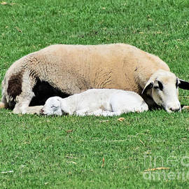 Now I Lay Me Down To Sleep by Kathy M Krause