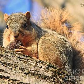 Nuts To You, Gray Squirrel by Steve Gass