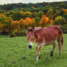 NY  Hudson Valley Countryside  by Susan Candelario
