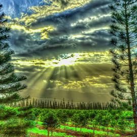 Oahu Hawaii Stairways To Heaven North Shore Agriculture Farming Art by Reid Callaway