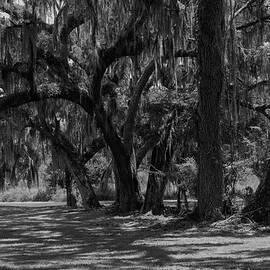 Oak Hammock by Chris Mercer
