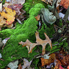 Oak Leaf and Green Moss by Kathi Mirto