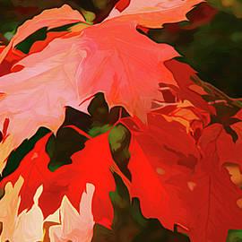 Oak Madness by Susan Buscho