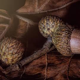 Oak by Tom Mc Nemar