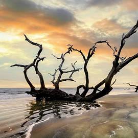 Oak Tree at Low Tide at Jekyll Island  by Debra and Dave Vanderlaan
