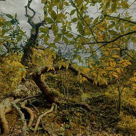 Oak tree forest by Giorgos Karampotakis