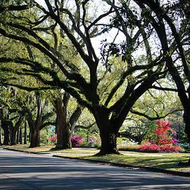 Oaks And Azaleas by Cynthia Guinn