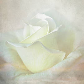 Ocean Rose by Terry Davis