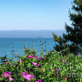 Ocean View with Flowers by Bob Phillips
