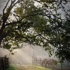 Ochee in the morning light by Rabiah Seminole