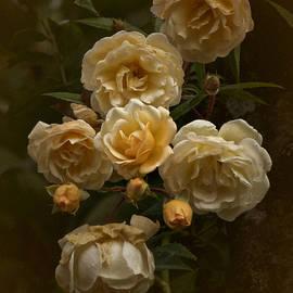 October 2020 Roses by Richard Cummings