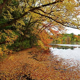 October Day at Reservoir, Needham, MA by Lyuba Filatova