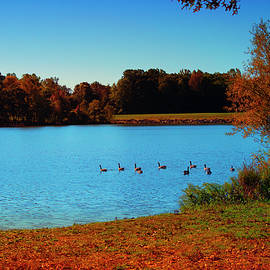 October Geese by Denise Harty