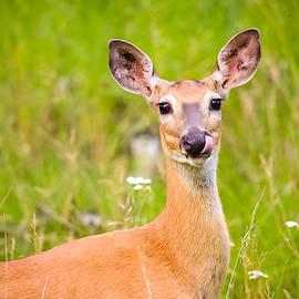 Oh Deer by Bonny Puckett