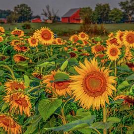 Oh, Happy Day by Marcy Wielfaert