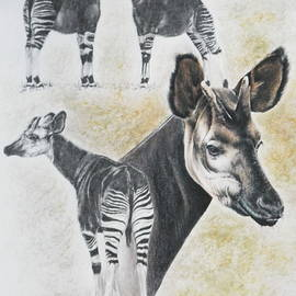 Okapi by Barbara Keith