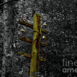 Old Telegraph Pole  by Yvonne Johnstone