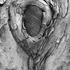 Old Tree Trunk In The Park by Gary Slawsky