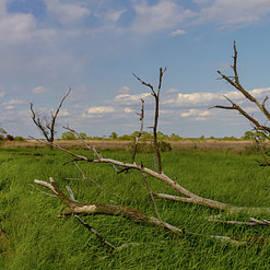Old Virginia Marshlands by Norma Brandsberg