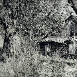 Old Wooden Cabin by Arro FineArt