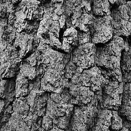 Tilia's Bark In Black and White by Maria Faria Rodrigues