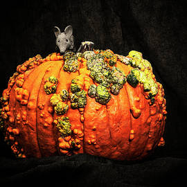 Ollie and The Pumpkin by Sandra Selle Rodriguez
