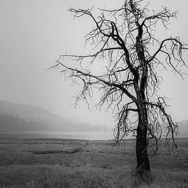 Ominous by Mike Lee