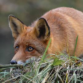 On the hunt by Nicole Wiggerman